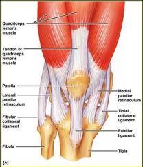 Lateral Patellar Ligament Patellar Tendon And Ligament