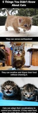 Cat Facts Meme - c u r s e d image the meme team pinterest memes meme and