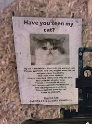 Newspaper Cat Meme - have you seen my cat t there in the s the best teh and tab hug me