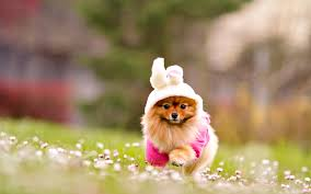 cute dog wallpapers best cute images free download wallpaper wiki
