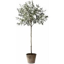 cheap olive tree pot find olive tree pot deals on line at alibaba