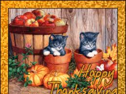 thanksgiving cat pictures images photos photobucket