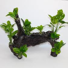 large aquarium ornaments and decoration driftwood with plants