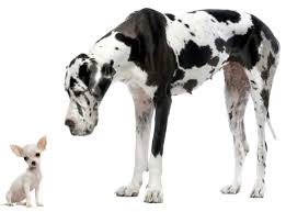 dogs smal two animals nature friends greatdane big dogs cute