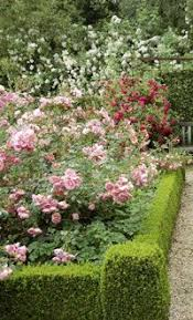 56 best roses images on pinterest flowers beautiful gardens and