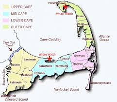 Cape Cod Weather October - cape cod whale watching what you need to know before you go