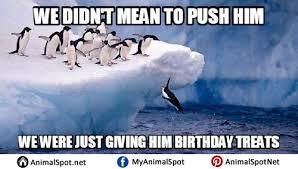 Penguin Birthday Meme - penguin memes