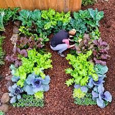 plant a cool season vegetable garden edible garden garden