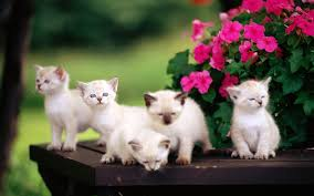 cute baby cats wallpaper