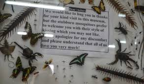 ode to the museum of world insects and natural wonders in chiang mai