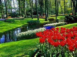 tulips spring beautiful garden wallpaper flower full hd flower
