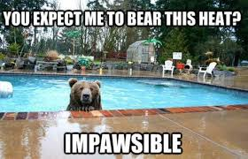 Animal Pun Meme - you expect me to bear this heat impawsible lolbook