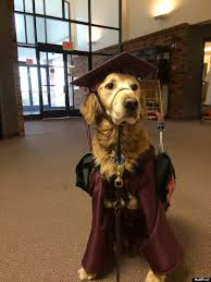 dog graduation cap and gown loyal service dog dons cap and gown to join 17 year at