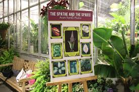11alive com 3 smelly corpse flowers to bloom at us botanic gardens