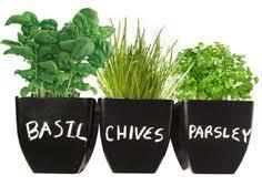 Indoor Herb Garden Kit Diy Indoor Herb Garden Tutorial Step By Step Instructions To