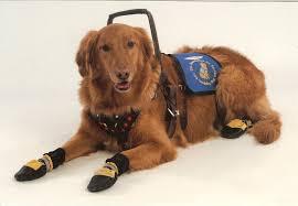 faq u2013 the foundation for service dog support inc