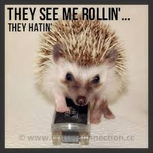 Hedgehog Meme - they see me rollin they hatin hedgehogs pinterest hedgehog