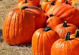 national pumpkin day in 2017 2018 when where why how is