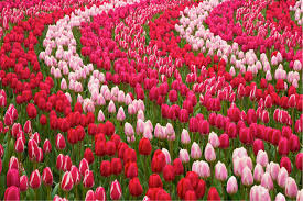 where to see flowers tripping com