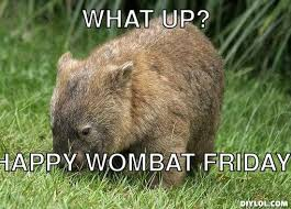 Wombat Memes - a view from the beach friday news from the wombat