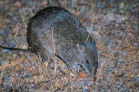 native plants of australia list natural wildlife u0026 flora for the track the track bibbulmun track