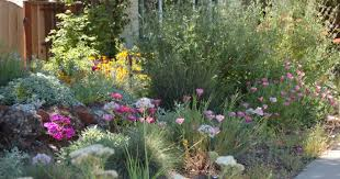 native plant garden california native front garden bed in spring kelly marshall