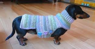 how to crochet a dog sweater tips and tricks to keep your pet warm