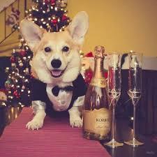 Christmas Dog Meme - dog meme monday holiday dogs dogs at christmas dogs dressed up