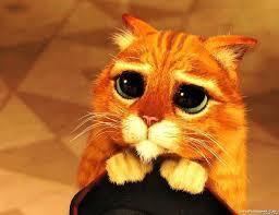 Cat Meme Maker - beggin cat meme generator captionator caption generator frabz