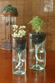 bottle planter 8 plastic bottle planters thefancyteacup com