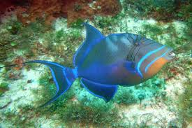 5 colorful fish you will see while snorkeling the mexican