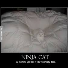 When You See It Meme - ninja cat by the time you see it you re already dead meme photo
