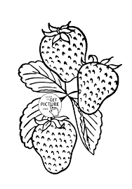 tasty strawberry fruit coloring page for kids fruits coloring
