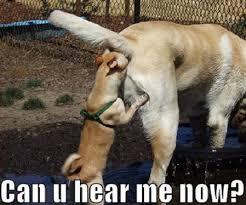 Best Dog Memes - funny dog memes i top 50 of all time i world wide interweb