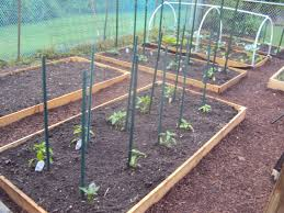 vegetable garden design choosing right layout for your