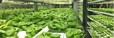 40 foot shipping container farm can grow 5 acres of food with 97