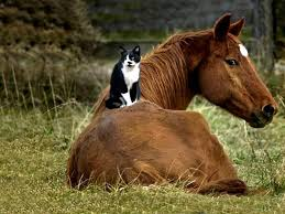 cat horse and wallpapers