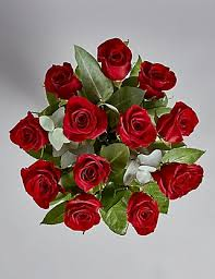 valentines roses the collection dozen freedom s roses m s