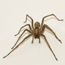 is it ok to throw house spiders outside