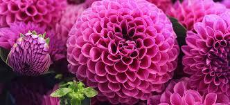 wholesale flowers online freshcut wholesale flowers farmer to florist online flower