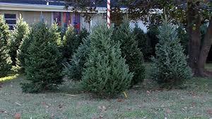 nashville boy scout troop begins annual tree sale wkrn