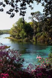 Florida nature activities images 982 best florida images florida travel florida jpg