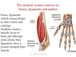 Anatomy And Physiology Exercise 10 10 Response Of The Skeletal System To Exercise Osteoporosis And Fitn U2026