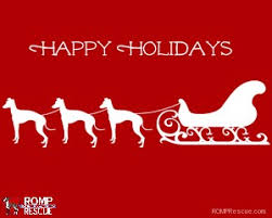 italian greyhound christmas cards romp italian greyhound