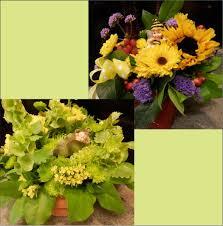 Cut Flower Garden by Incahoots U2013 Plants Flowers Gifts