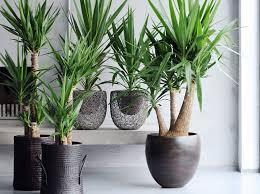 plante pour chambre galerie d web quelle plante pour une chambre quelle plante pour