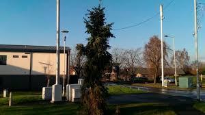 is the u0027brinnington twig u0027 the worst christmas tree in britain