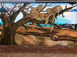 leapin leopards it s a jungle out there at lowell elementary leopards painted by gomez on the front wall at lowell elementary school andrea brown the herald