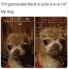 Sexy Dog Meme - sexy depressed delicious memes