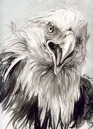 eagle head ink kim pearce paintings u0026 drawings